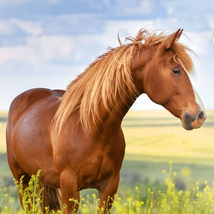 スカルプ馬