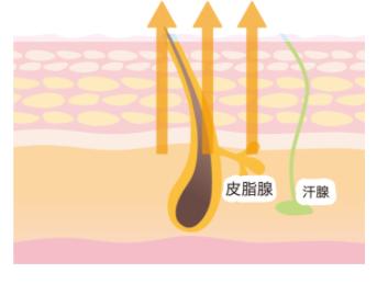 断食肌の湯 汗仕組み