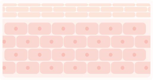 肌細胞の配列図