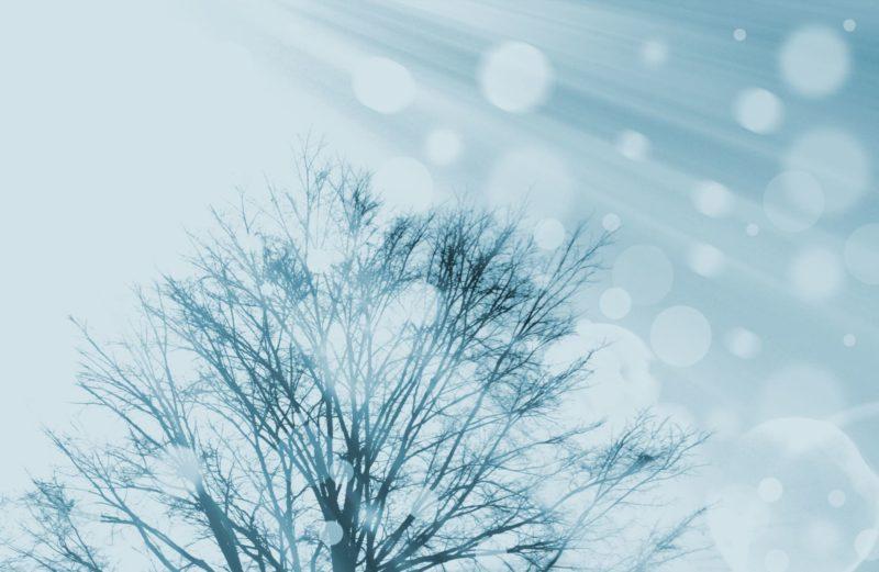 雪が降りそうな寒々しい木と光になっている空