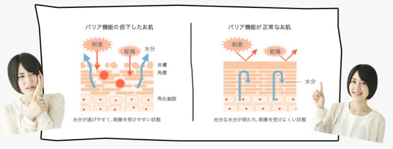ロベクチン 肌バリア