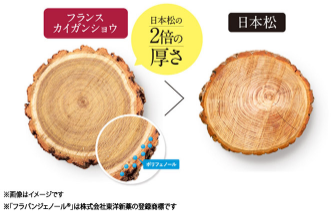 フラビア 樹皮
